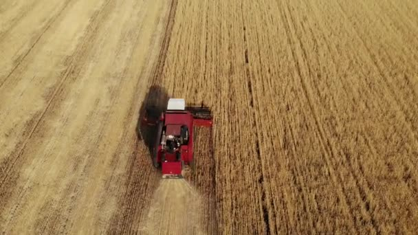 Aerial view combine harvester gathers the wheat crop. Wheat harvesting shears. Combines in the field food industry concept. 4K