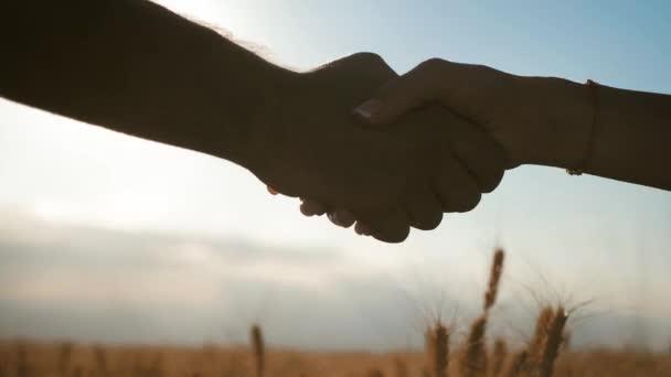 Zemědělci si potřesou rukou nad pšeničnou úrodou v době sklizně. Koncept partnerství.