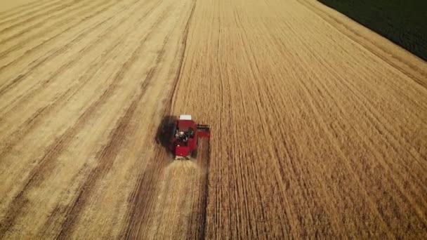 A légi-és a veteményészter összegyűjti a búza termés. Búza szüret ollók. Egyesíti az élelmiszeripari ágazat fogalmát. 4k