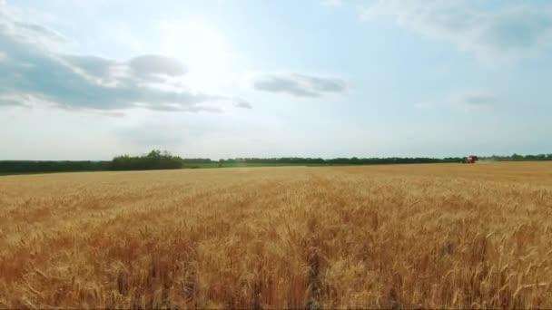 A kombájn összegyűjti a búzatermést. Búza arató olló. Kombinációk az élelmiszeripar területén.