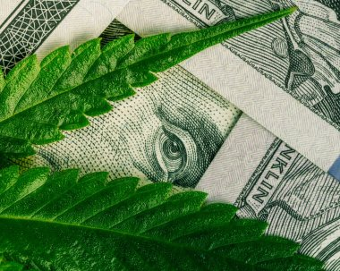 Increase revenue and profits in the field of growing medical cannabis. Leaf of marijuana in cash hundred dollar bills.