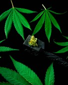 Tabák potrubí a marihuany listy, koncept konopí konopí pro kouření. Léčba kouření marihuany. nové lékařské terapie.