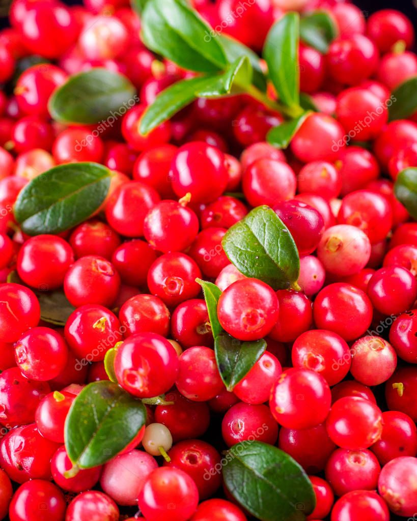 Background with cowberry. Vaccinium vitis idaea lingonberry ...