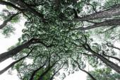 Klasický pohled na jehličnatý a listnatý les na krásném slunečném dni se zelenými loukami, spodní pohled