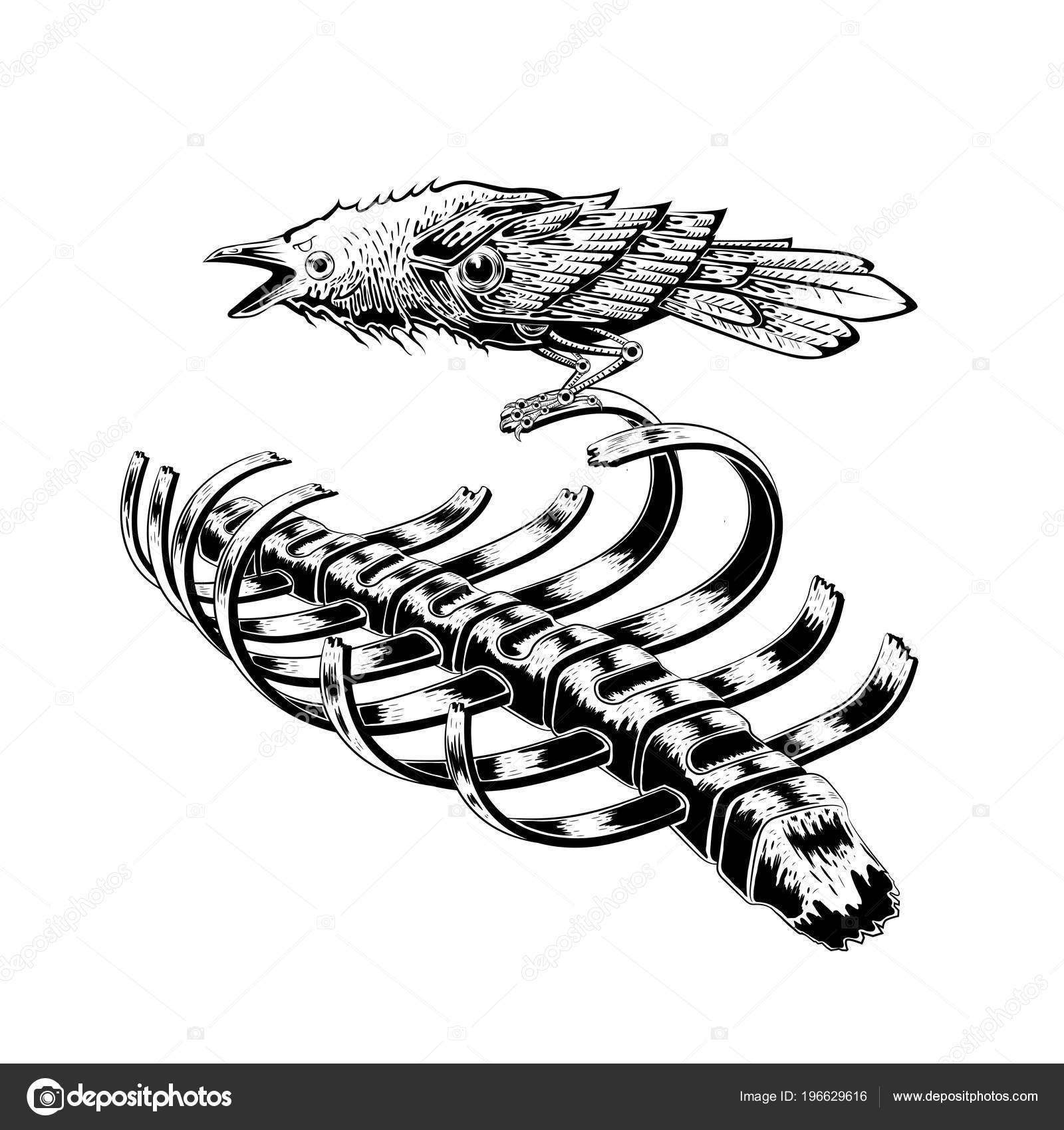 Schwarzer Rabe Vogel Bleiben Auf Rippe Skelett Krähe Vogel Anatomie ...