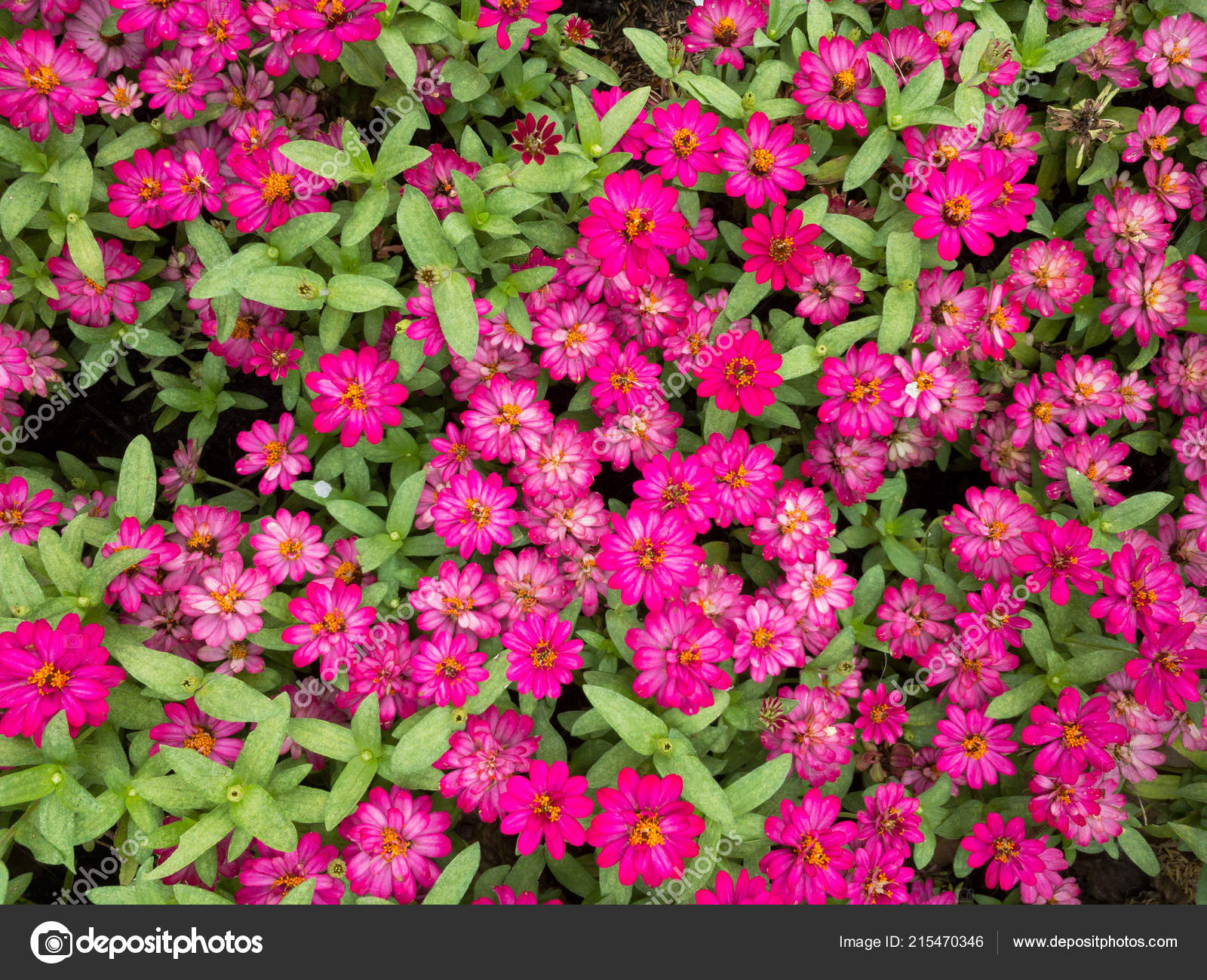 Pictures small flower garden