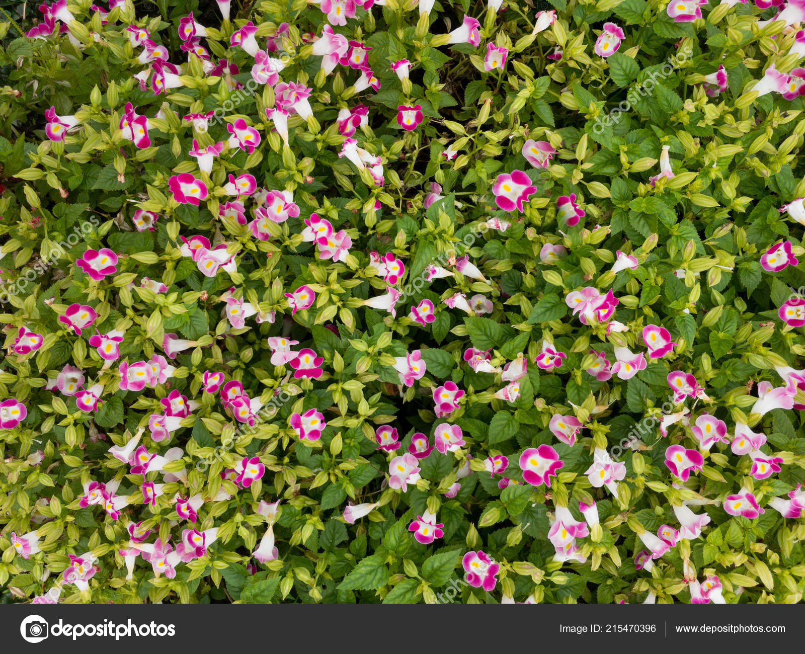 pictures little flower top view beautiful little flower garden background little flowers garden stock photo c somdul 215470396 https depositphotos com 215470396 stock photo top view beautiful little flower html