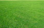 Fotografia Sfondo del campo di erba verde. Erba verde pattern e texture. Sfondo di prato verde