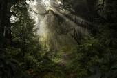 Giungla asiatica della foresta pluviale nel mese di agosto