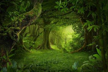 Asian rainforest jungle in august