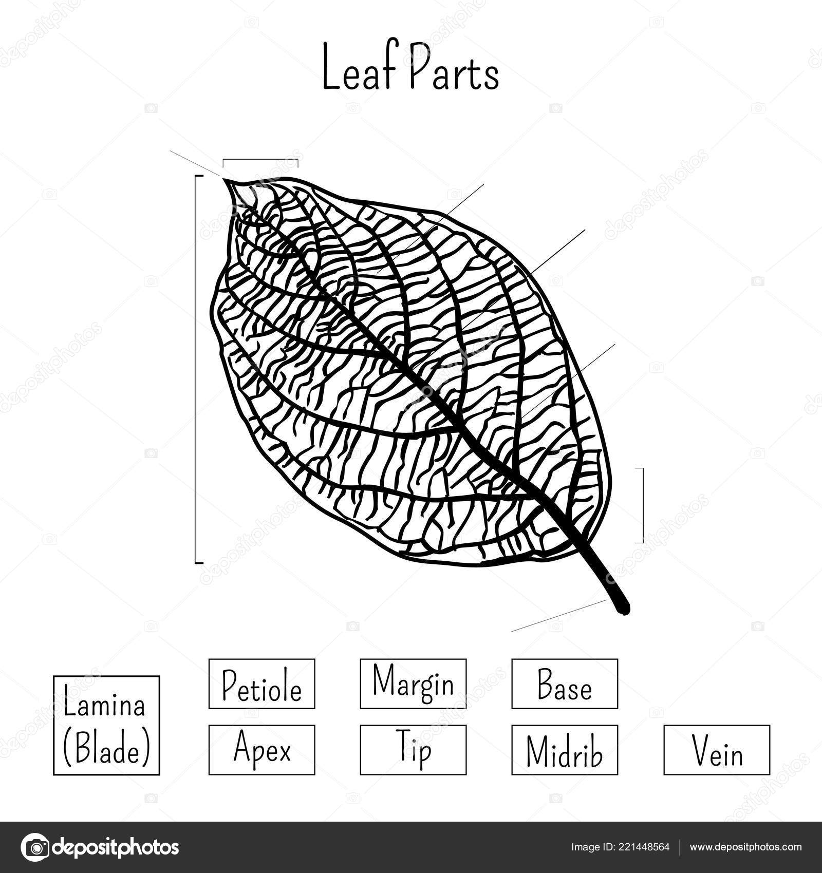 Label parts of plants worksheet | Basic leaf parts worksheet ...