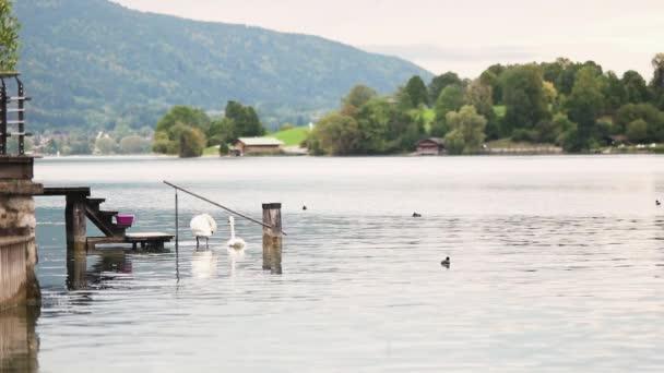calm lake view video