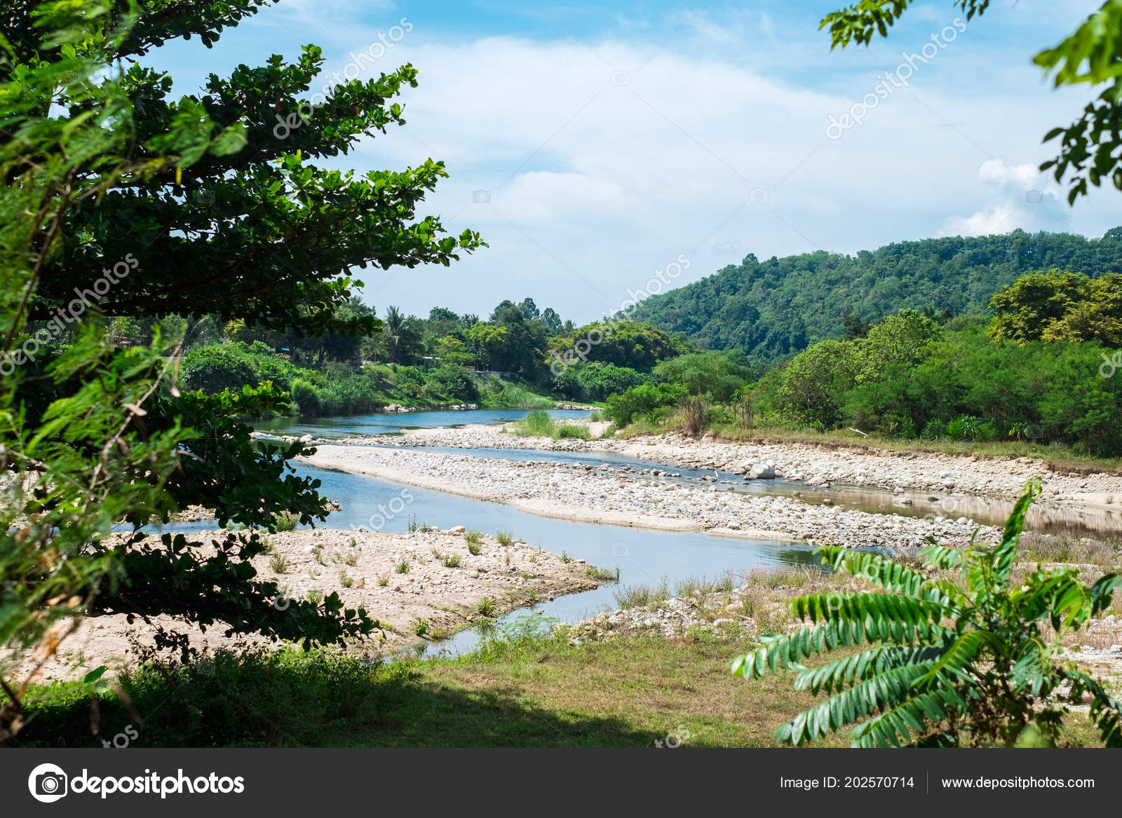 Nature Background Beautiful Forest River Landscape View