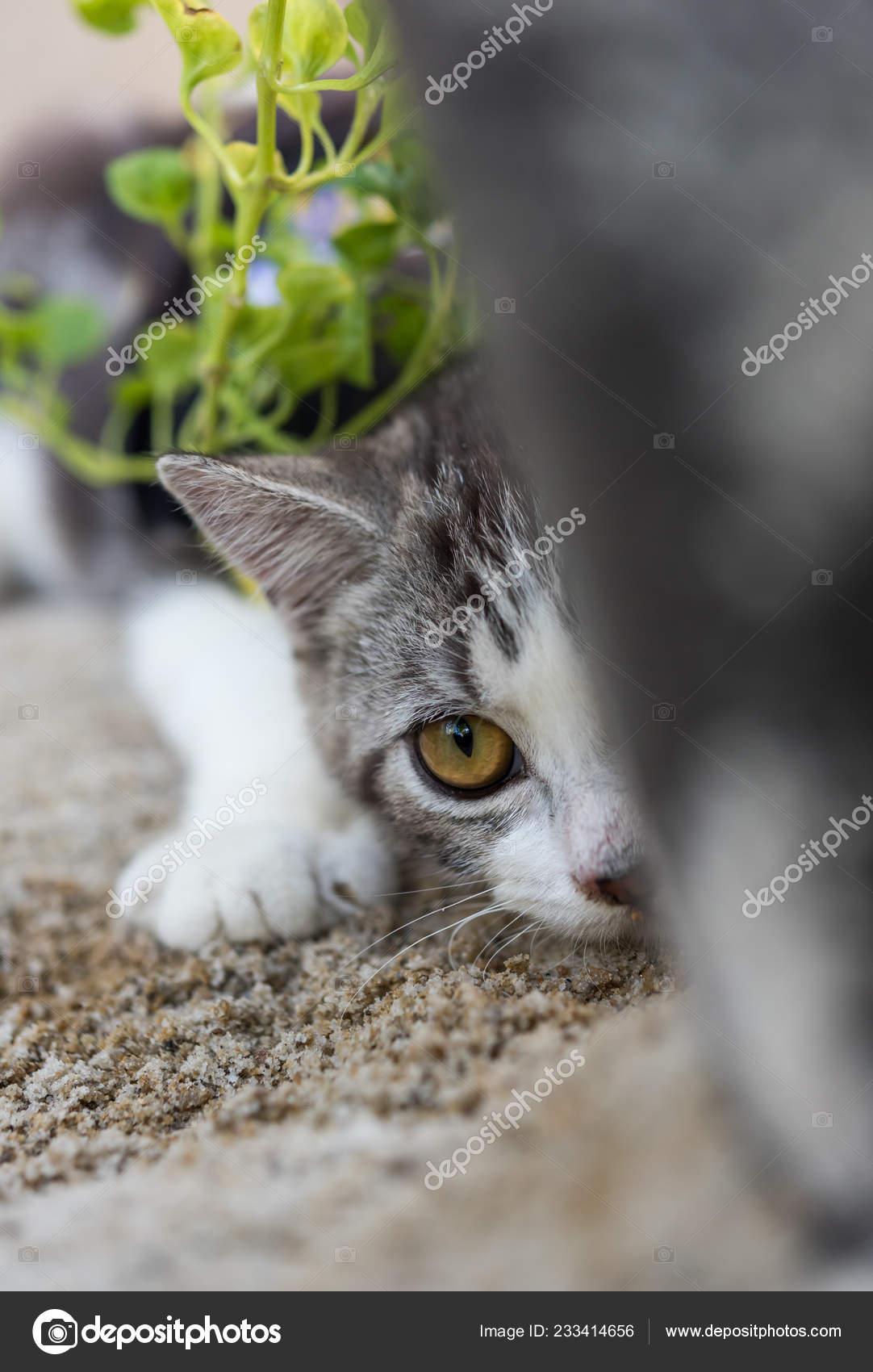 Tyto sexy kočičky možná fanoušci uvidí opět pohromadě: Skupina Pussycat.
