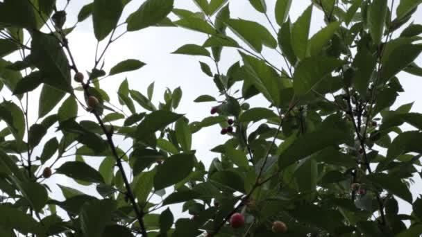 Relax video top pohled na stromové listy a nebe