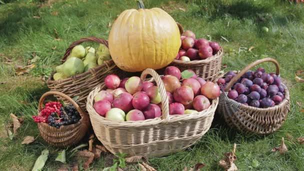 Koše s červená jablka, zelené hrušky, švestky, červené a černé Rowan stojan na zelené trávě, žlutá dýně je nainstalován na vrcholu. Poblíž složení letí bílý motýl