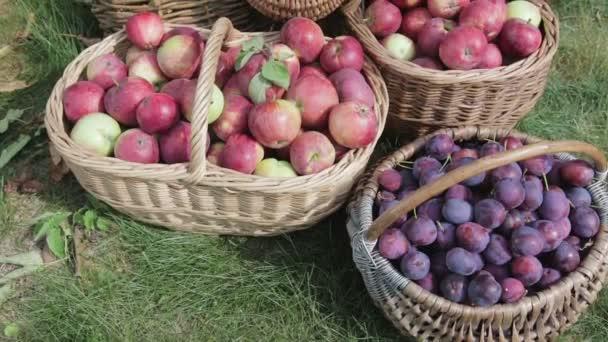 Koše z červeného jablka, zelené hrušky, švestky, červená a černá Rowan stojan na zelené trávě