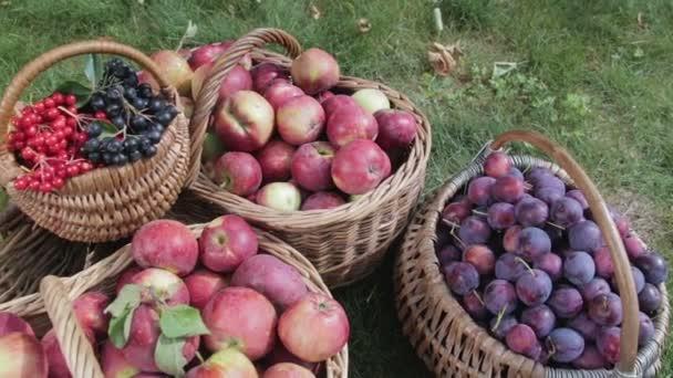 Zátiší z podzimní sklizně zeleniny a ovoce
