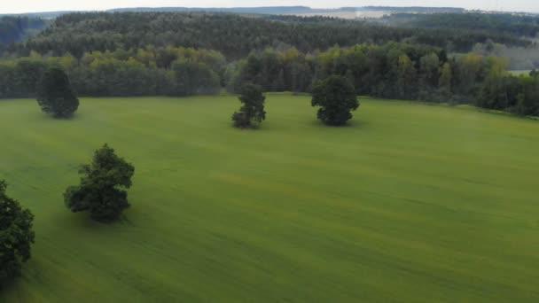 Letecký pohled na pole oseté pšenice, obilnin. V dálce můžete vidět les v mlze