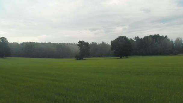Letecký pohled na pole oseté pšenice, obilnin. V dálce vidíte dva staré duby a Les v mlze