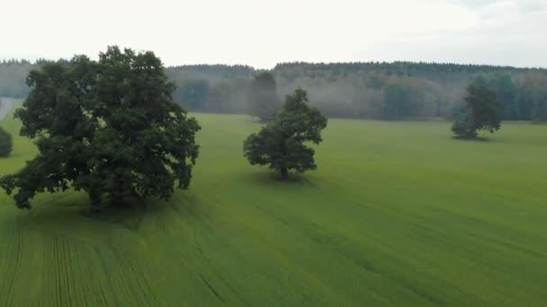Letecký pohled na pole oseté pšenice, obilnin. Na místě jsou stále staré duby, v dálce je les v mlze