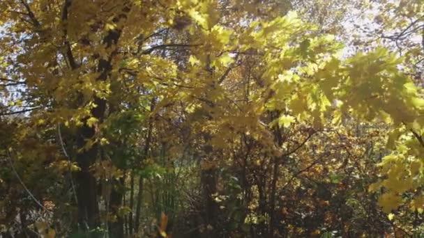 Panorama z podzimního lesa, podzimní Krajina světla