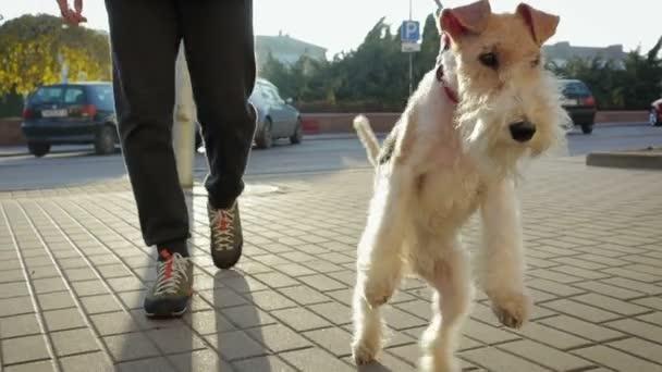 Ein Mann geht mit seinem Hund an der Leine durch die Stadt