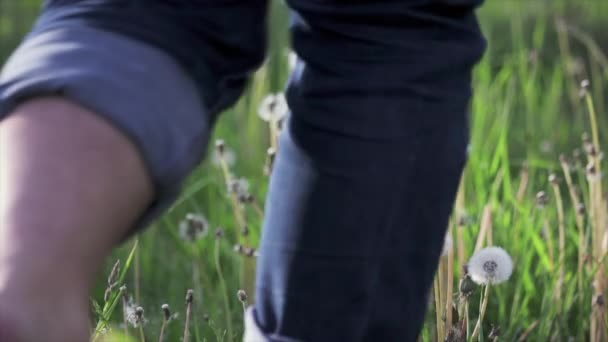 Barfuß-Mann läuft über das Feld und schlägt Löwenzahn Flaum