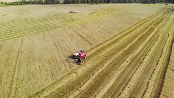 Two red harvesters working in a wheat field