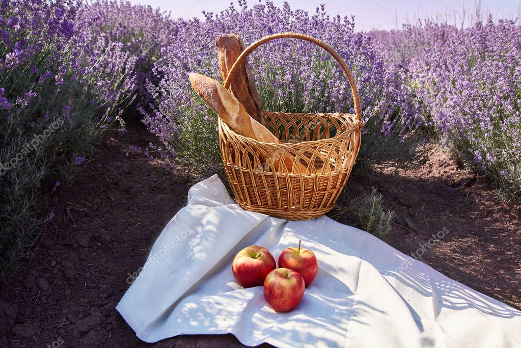 Wicker basket with bread and apples in the lavender fields