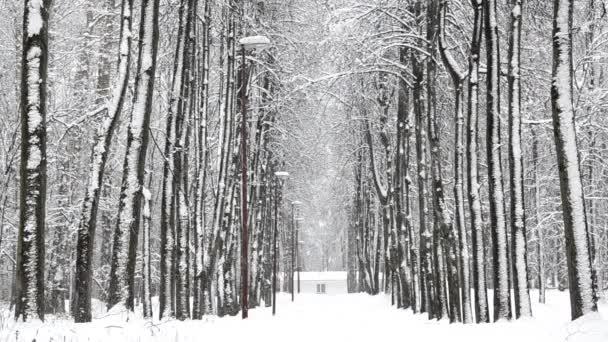 Havazik télen az erdőben, lágy havas karácsony reggel esik a hó