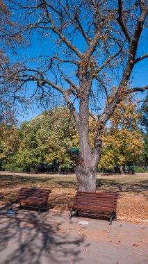 SOFIA, BULGARIA - OCTOBER 5, 2018: Landscape with Trees and gardens at Borisova gradina(Boris Garden) in city of Sofia, Bulgaria