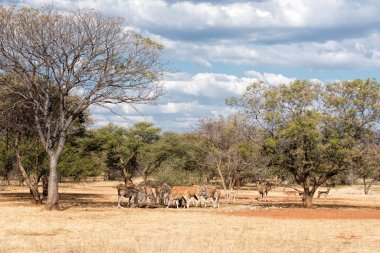 Elands Cape in Namibia