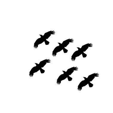 """Картина, постер, плакат, фотообои """"векторный силуэт вороновых мух """", артикул 384365376"""