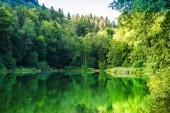 Fotografie Blick auf den Natursee egelsee am bergdietikon bei Zürich - Schweiz