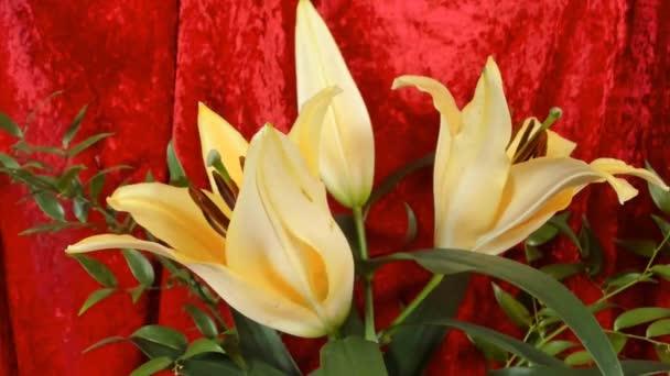 Közeli fel a sárga liliom virágok nőnek a kertben.