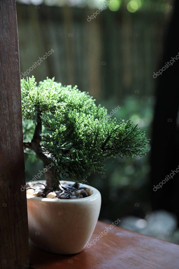 Bonsai on jar in green cafe background