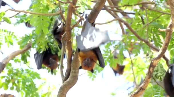 Lyles flying fox (Pteropus lylei) on a tree in tropical rain forest