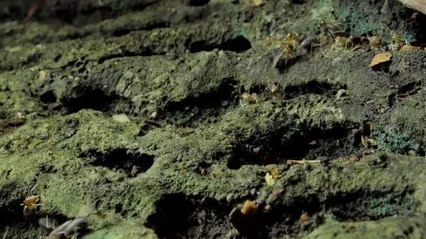 Masse Der Termiten Macrotermes Boden Tropischen Regenwald