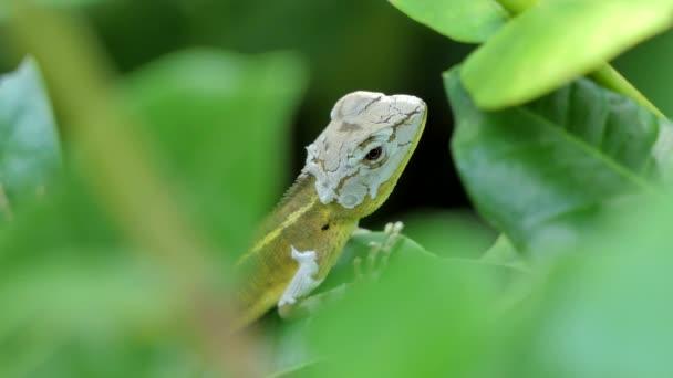 Orientální zahrady ještěrka na strom v tropickém deštném pralese.