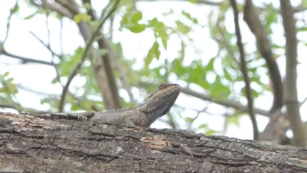 Chameleon na strom v tropickém deštném pralese.