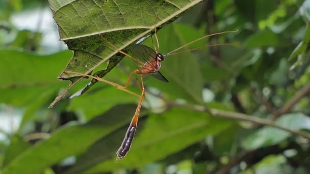 Parasitic wasps on green leaf in tropical rain forest.