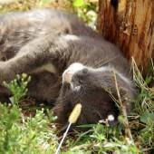 Fotografie Kočka leží v trávě