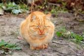 Fotografie kočka na ulici
