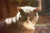 Fotografie Krásná kočka v domě