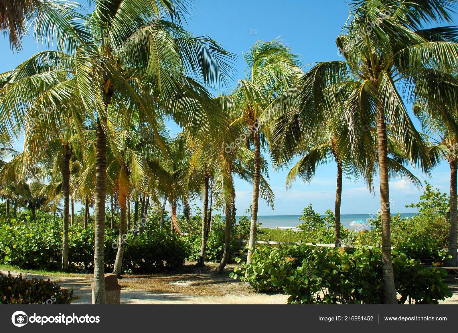 Pictures Palm Trees Landscaping Beautiful Tropical Palm Trees Landscape Background Florida Usa Stock Photo C Howdy76 216981452