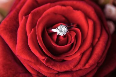 Rose with beautiful engagement ring, closeup