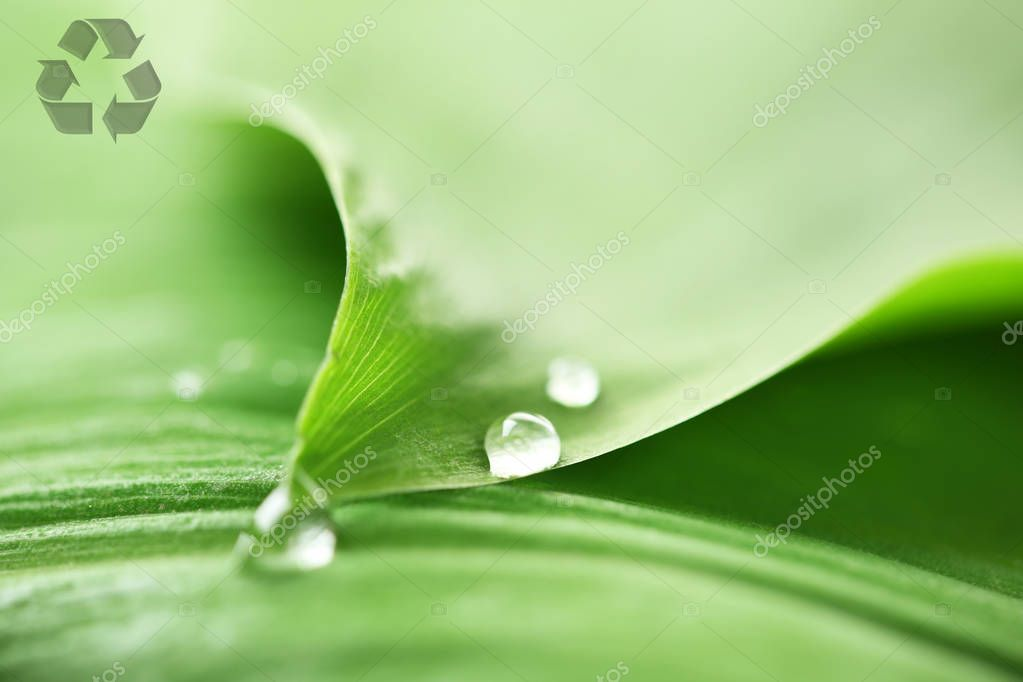 Closeup view of green leaf with water drops and recycling symbol. Save nature and environment