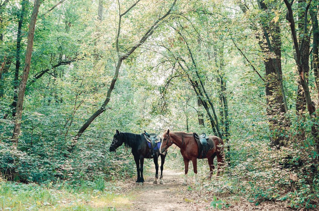 Two horses in the forest. Black and brown horse