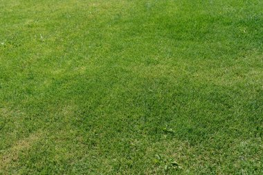 Fresh green lawn close up with free space. Natural green grass background. Green lawn pattern textured background